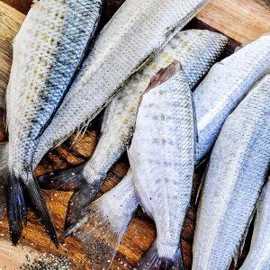 La Cucina di Pesce Corso Base